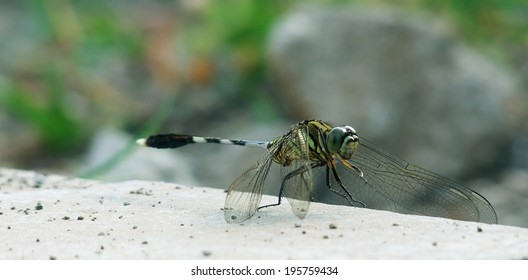 Closeup of resting green dragonfly