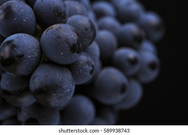 Close-up, ripe dark grape berry isolated on black background