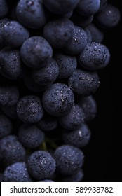 Close-up, ripe dark grape berry with drops of water isolated on black background