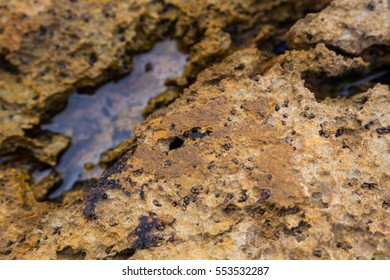 closeup rock with puddle from atlantic coastline