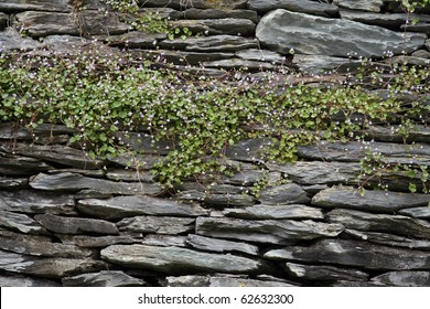 Closeup of a rock wall with a vine