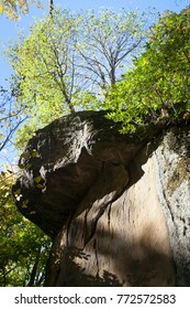 Closeup of rocky cliff with growing tree against blue sky