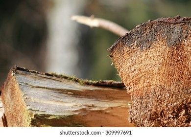 Closeup of Rough Wood Log