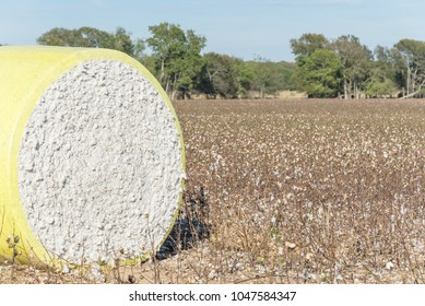 Close-up round bale of harvested fluffy cotton wrapped in yellow plastic. Captured cat cotton field in Northeast Texas. Agriculture background