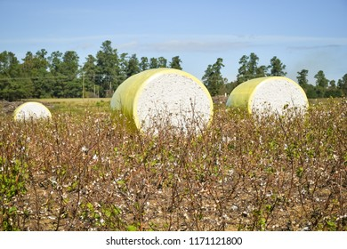 Close-up round bales of harvested cotton wrapped in yellow plastic. Agriculture background