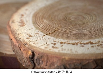 Closeup Round Shape Slices Of Unfinished Natural Wood Disc With Bark Growth Ring And Crack