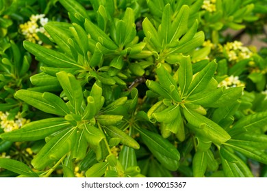 Close-up of round-shaped leaves on a tree