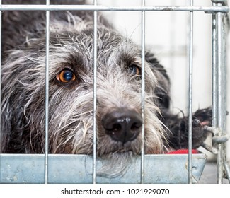 Closeup of a sad homeless dog in a crate behind wire bars at a shelter