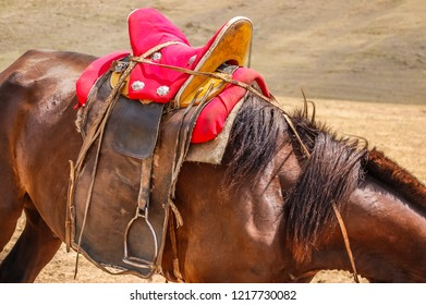 Closeup of saddled horse with traditional saddle in Mongolia on steppe