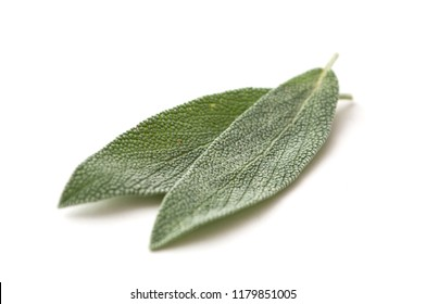 closeup of salvia officinalis leaves on white background