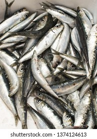 Closeup of sardines to the fish market in Udine Italy