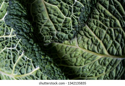 Closeup of Savoy cabbage leaves
