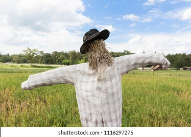 Closeup scarecrow in rice field of Thailand.