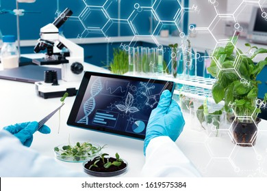 Closeup scientists hands are holding tablet. Biologist is working at microbiology laboratory. Woman is conducting experiments, tests with plants. Biotechnologist is researching leaves on computer.