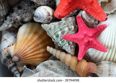 close-up of sea shell and starfish