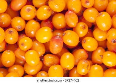 close-up sea-buckthorn, background