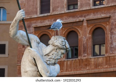 A closeup of a seagull on the Statue of the Fountain of Neptune, Rome, Italy
