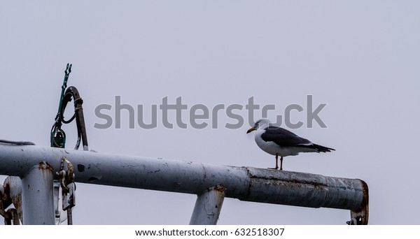 Closeup of a seagull perched on metal  crossbeam of a boat