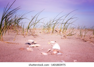 close-up of seahells and grass in the sand by the beach