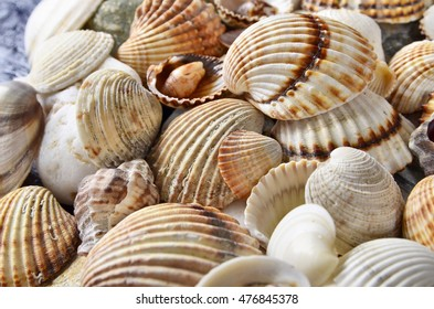 close-up  seashells and stones of many types and sizes