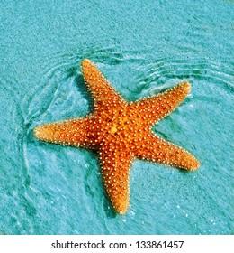closeup of a seastar in a tropical beach