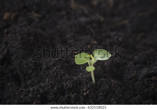 closeup seeding Plant seed growing. concept start up life agriculture.