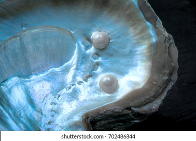 Closeup and Selective Focus of Cultured Pearls inside Oyster Shell.