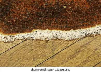 closeup of Serpula lacrymans fruiting body growing on wooden parquet; this species of fungus is the most damaging in damp buildings