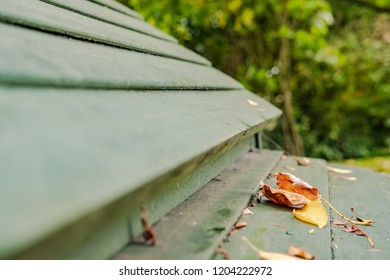 Close-up, shallow focus of an autumn leaf seen laying on the roof of a home-made timber built chicken house seen in a domestic garden.
