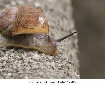 Closeup  shell invertebrate
