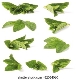 Close-up shoot of various green peppermint plant. Isolated on white background. (lat. Mentha piperita)