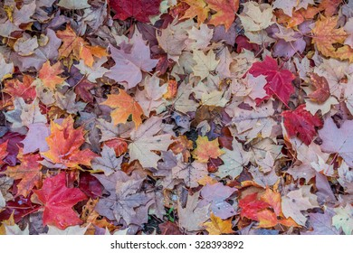 Closeup shot of Autumn leaves on the ground.