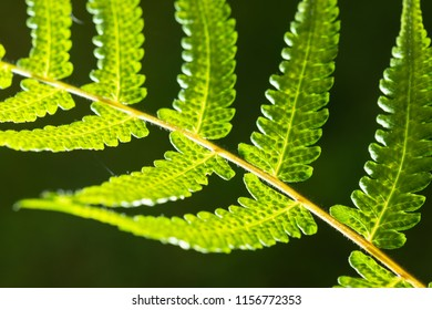 Closeup shot of backlit fern leaf