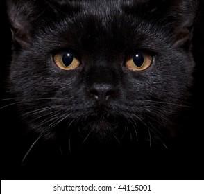Close-up shot of a black cat with orange eyes
