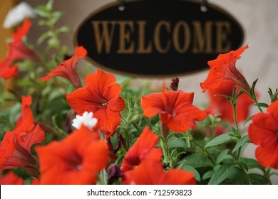 Closeup shot of blooming flowers with a Welcome sign