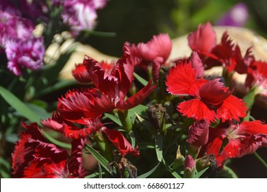 Close-up shot of blooming Red flower
