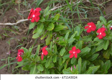 Close-up shot of blooming Red flowers