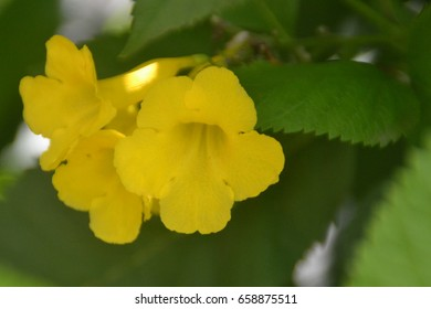 Close-up shot of blooming yellow flowers