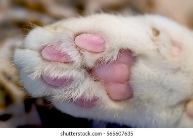 Closeup shot of the cat's paw