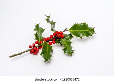 A closeup shot of Christmas holly plant branch decoration with ripe red berries isolated on a white background