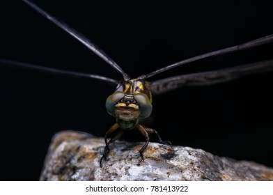 closeup shot of a dragonfly in nature