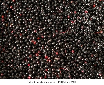 Closeup shot of elderberry berries harvested during summer.