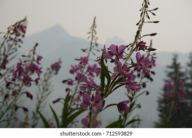 Closeup shot of flowers with smokey background from forest fires