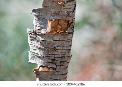 closeup shot of a fragment of a cracked tree bark