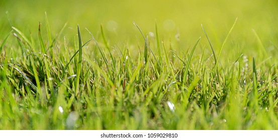 Closeup shot of grass with golden sunlight shining in the morning