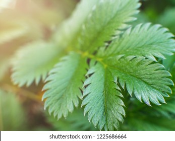 Close-up shot of a green fern branch with background out of focus