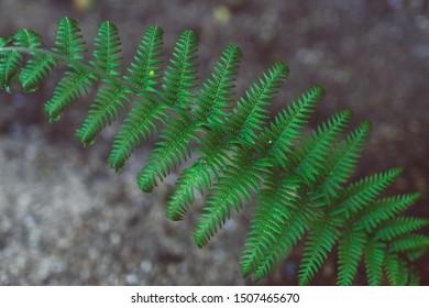 close-up shot of green fern leaf shot at shallow depth of field