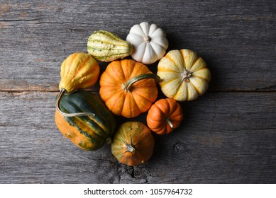 Closeup shot of a group of decorative Pumpkins, Squash and Gourds with copy space.