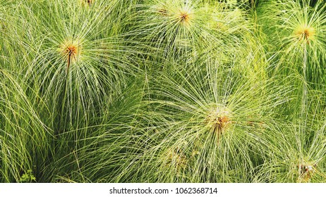 Sedge Stock Images, Royalty-Free Images & Vectors | Shutterstock