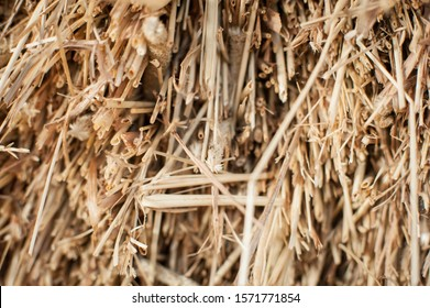 A closeup shot of hay in a pile at a barn